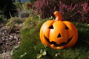 pumpkin-980587_640