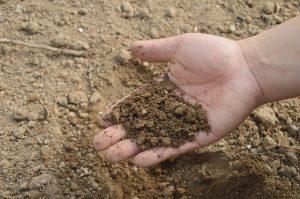 soil-766281_640