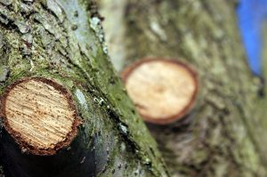 tree-1225616_640